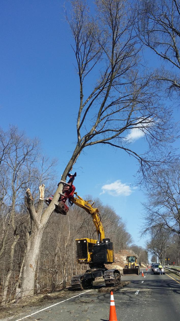 Feller Buncher on the Merritt Parkway Connecticut removing hazardous trees.